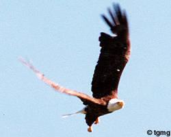 phot_eagle4