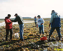 pict_clamming1