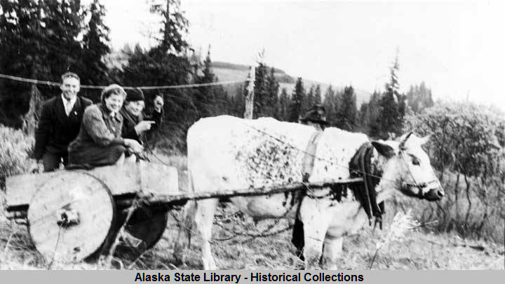 Homer_Alaska_1943__Two_Seldovia_school_teachers_and_a_man_in_a_cart_being_pulled_by_a_cow